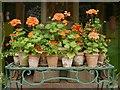 SP1742 : Geraniums at Hidcote Manor Garden by David Dixon