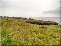 NZ4163 : Whitburn Coastal Park by David Dixon