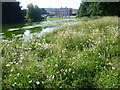 TQ4857 : Wildflower meadow next to the lake at Chevening by Marathon