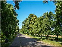 TQ2897 : Main Driveway, Trent Park, Cockfosters, Hertfordshire by Christine Matthews