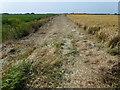 TL4589 : Five Hundred Drove, Manea by Richard Humphrey