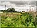 NZ2770 : Grassy Area Next To Killingworth Lake by David Dixon