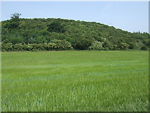 SK2122 : Crop field and woodland, Lawns Farm by JThomas