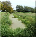 ST3784 : Reen near Manor House Farm, Whitson by Jaggery