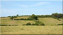 NZ1426 : Fields north of Ramshaw by Trevor Littlewood