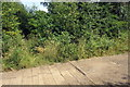 SP7327 : Disused tracks disappear into the undergrowth by Philip Jeffrey