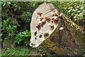 NT1070 : Fungi near Clifton Hall by Jim Barton