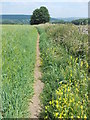 SK2265 : Footpath to the south of Haddon Fields by Neil Theasby