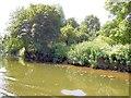 TQ7454 : River Medway, near Bydews farm by Paul Gillett