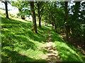 SX2483 : Hillside path, River Inny valley near Gimblett's Mill by Maurice D Budden