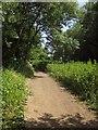 ST6470 : River Avon Trail at Bickley Wood by Derek Harper