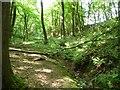 TQ8927 : Stream in Church Wood by Christine Johnstone