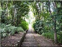 SJ9090 : Steps to riverside footpath by Gerald England