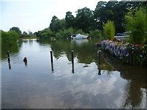 TQ1673 : The flooded River Thames in front of the White Swan at Twickenham by Marathon