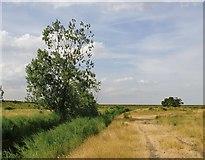TQ7178 : Marsh landscape near Lower Hope Point, July by Stefan Czapski