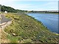 NT9853 : Looking downstream towards the Royal Border Bridge at Berwick-upon-Tweed by Clive Nicholson