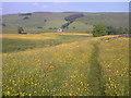 SD9363 : Footpath Across Buttercup Meadow by Mick Garratt