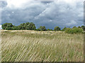 TQ0049 : Lowering skies, Pewley Down by Alan Hunt