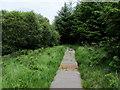 NR8391 : Dalriada Heritage Trail in Coille Mhór by Chris Heaton