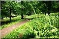 SU7687 : Shakespeare's Way in Great Wood by Des Blenkinsopp