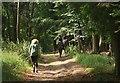 SU7786 : Bridleway up Reservoir Hill by Des Blenkinsopp