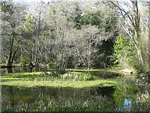 NS2209 : The smaller of the Swinston Ponds, Culzean estate by Humphrey Bolton