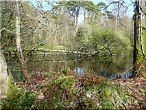 NS2209 : Swinston Ponds, Culzean estate by Humphrey Bolton