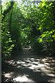 TQ2987 : Parkland Walk looking north by Julian Osley