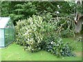 TR2043 : Storm damage in the garden of Winterdown Cottage by John Baker