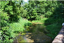 SU7251 : River Whitewater from Deptford Bridge by David Martin