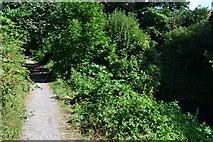 SU7151 : Basingstoke Canal towpath by David Martin