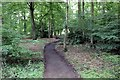 SD4616 : Woodland Walk at Rufford Old Hall by Jeff Buck
