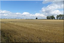 SE6045 : Stubble off the Selby cycle path by DS Pugh