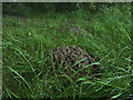 TF0820 : Molehills by Bob Harvey