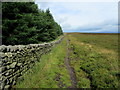 SE0846 : Beside the Plantation on Shepherd's Hill by Chris Heaton