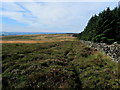 SE0845 : Plantation Edge on Rombalds Moor by Chris Heaton