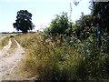 TG2700 : Sheep Lane bridleway by Geographer