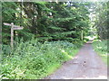 NT7755 : Woodland path in Duns Castle grounds by M J Richardson