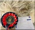 NH5349 : Prized fleece by Julian Paren