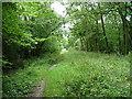 TL1581 : Aversley Wood, SW End by N Scott