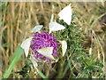 NT1982 : A moth - Udea lutealis by M J Richardson