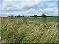 TF3764 : Farmland south-west of Glebe Farm by Christine Johnstone