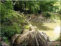 TQ2636 : Fallen tree, pond in Goffs Park by Robin Webster