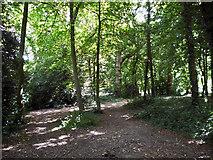 TQ2636 : Wood, Goffs Park by Robin Webster
