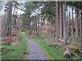NN8660 : Waymarked path, Allean Forest by Richard Webb