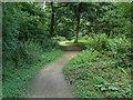 SU9941 : Woodland path by Alan Hunt
