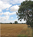 TL5463 : Towards Red Tile Farm by John Sutton