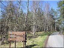 NH9718 : Path signage, Abernethy Forest by Richard Webb