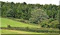 J4377 : Ballysallagh forest, Craigantlet by Albert Bridge
