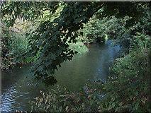 TQ0372 : River Colne by Alan Hunt